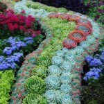 Landscaping succulents