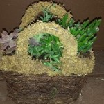 Succulent Centerpeices