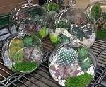 Succulent hanging terrarium favors