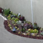 Succulents Landscaping Design